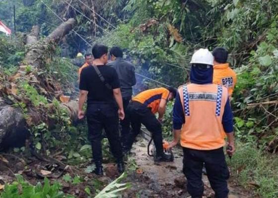 Nusabali.com - longsor-dan-pohon-tumbang-jalan-tutup-2-jam