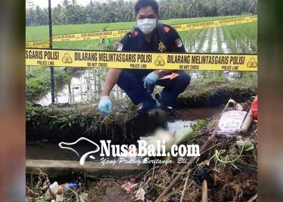 Nusabali.com - dikira-bangkai-babi-ternyata-orok