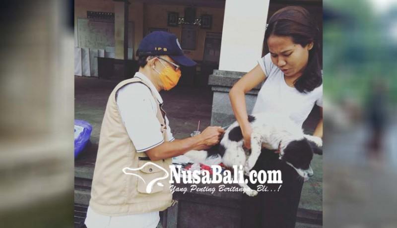 www.nusabali.com-vaksinasi-anjing-ditarget-70000-hewan