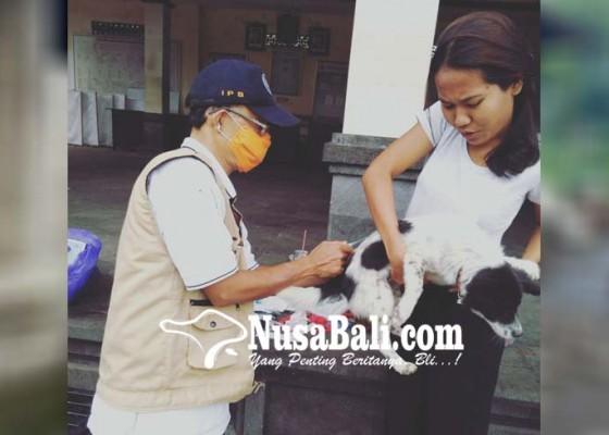 Nusabali.com - vaksinasi-anjing-ditarget-70000-hewan
