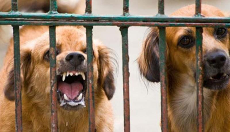 www.nusabali.com-puluhan-anjing-liar-dieliminasi