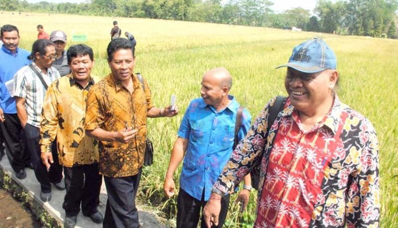 www.nusabali.com-tim-pip-melihat-produksi-benih-padi-di-boyolali