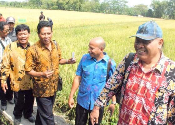 Nusabali.com - tim-pip-melihat-produksi-benih-padi-di-boyolali