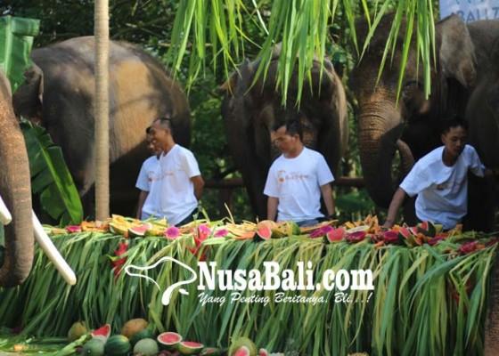 Nusabali.com - 10-gajah-berpesta