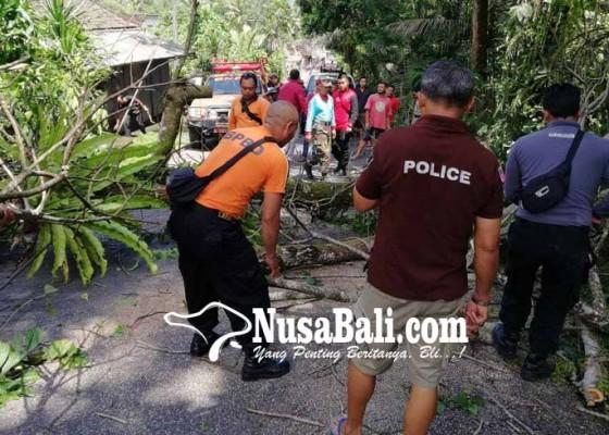 Nusabali.com - pohon-tumbang-puluhan-truk-terjebak