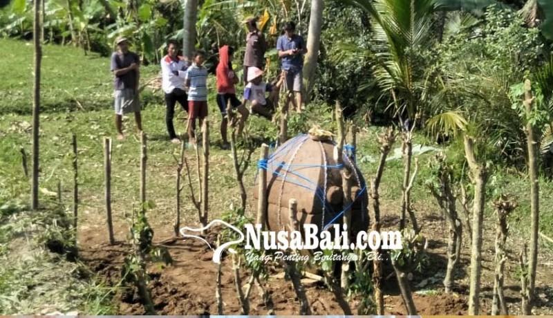 www.nusabali.com-sarkofagus-berisi-tulang-ditemukan-subak-dugul