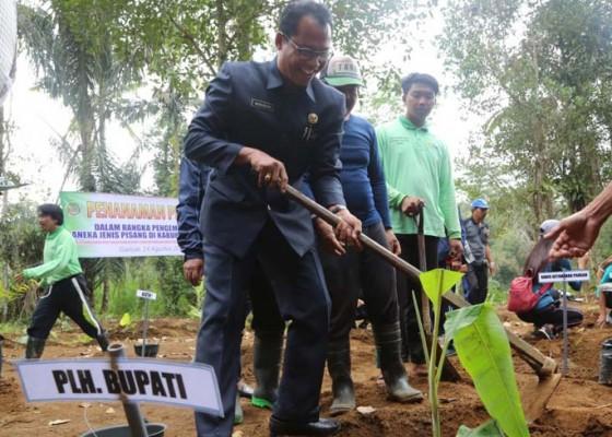 Nusabali.com - distan-wujudkan-demplot-pisang-di-taro