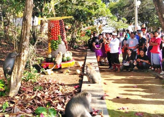Nusabali.com - banten-bebangkit-di-monkey-forest-ubud-gebogan-di-uluwatu