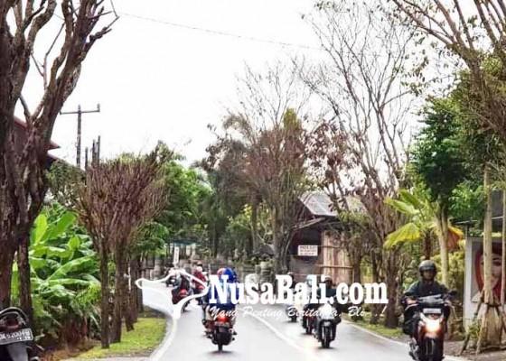 Nusabali.com - puluhan-pohon-perindang-mati-misterius