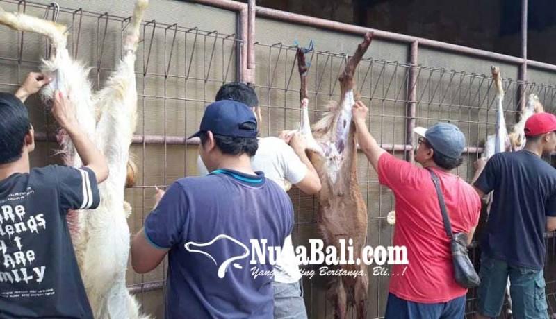 www.nusabali.com-daging-kurban-dibagikan-untuk-warga-lintas-agama
