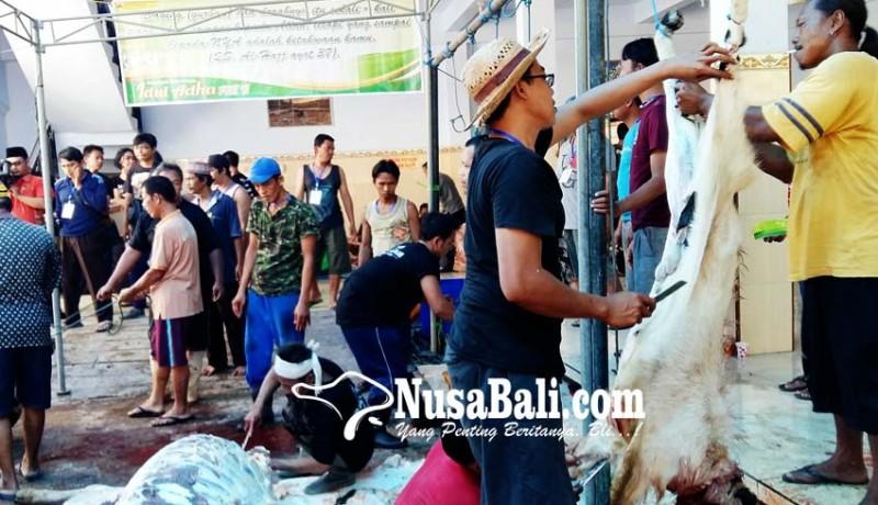 www.nusabali.com-ratusan-hewan-kurban-sehat-dan-layak-konsumsi