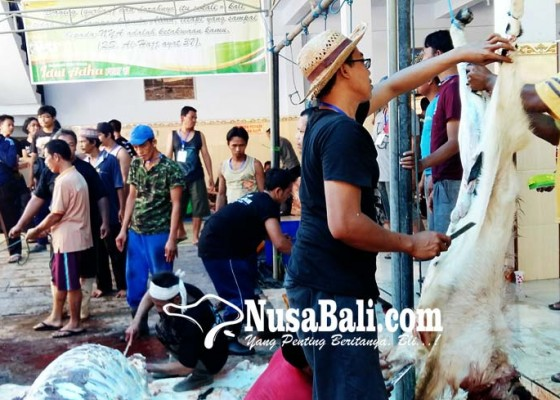 Nusabali.com - ratusan-hewan-kurban-sehat-dan-layak-konsumsi