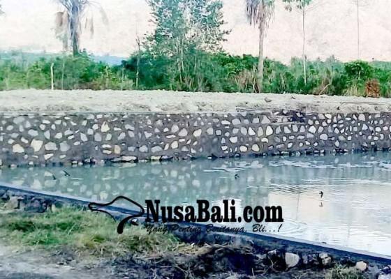 Nusabali.com - petani-krisis-pakan-ternak-sapi
