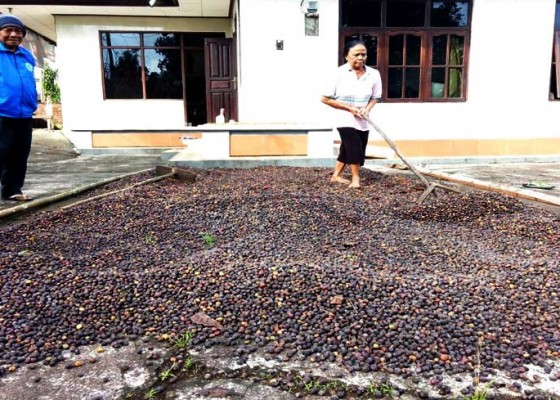 Nusabali.com - jemur-hasil-panen