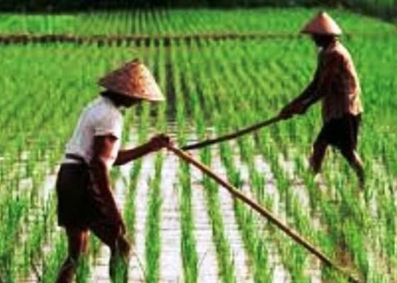 Nusabali.com - minat-generasi-muda-jadi-petani-setiap-tahun-terus-turun