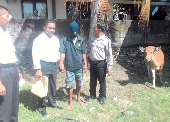 Nusabali.com - polisi-bekuk-spesialis-pencuri-sapi