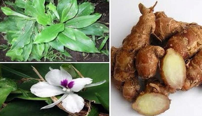 www.nusabali.com-feng-shui-pengobatan-tradisional-untuk-dispepsia