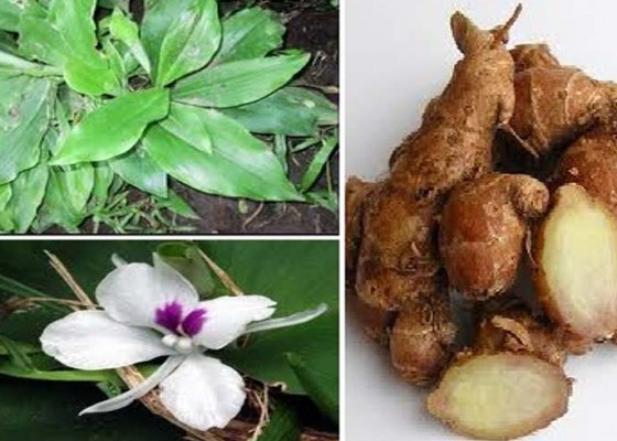 Nusabali.com - feng-shui-pengobatan-tradisional-untuk-dispepsia