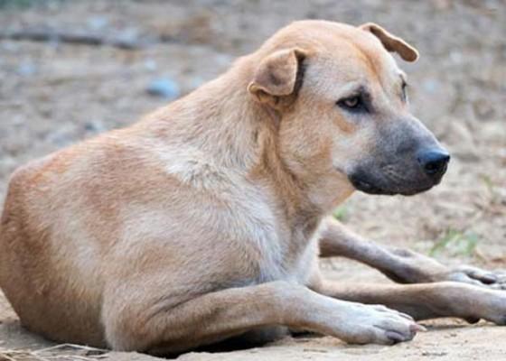 Nusabali.com - dprd-soroti-pembuangan-anjing-di-eks-galian-c