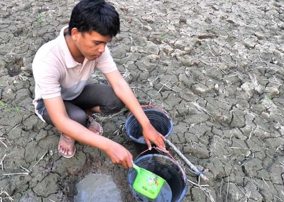 Nusabali.com - 11-provinsi-487-juta-jiwa-terdampak-kekeringan