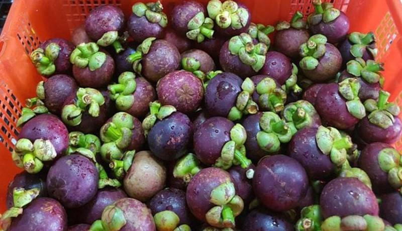 www.nusabali.com-manggis-ekspor-ke-china-bibit-ayam-ke-timor-leste
