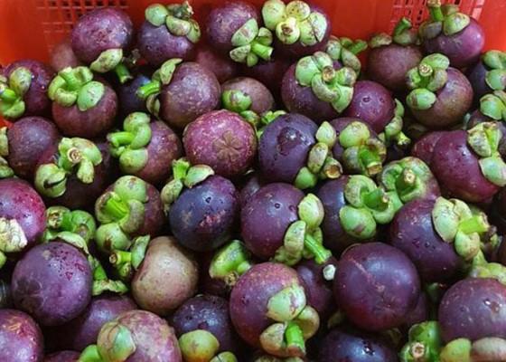 Nusabali.com - manggis-ekspor-ke-china-bibit-ayam-ke-timor-leste