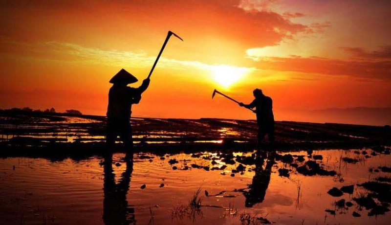 www.nusabali.com-petani-jembrana-terima-bantuan-alat-mesin-pertanian-kementan