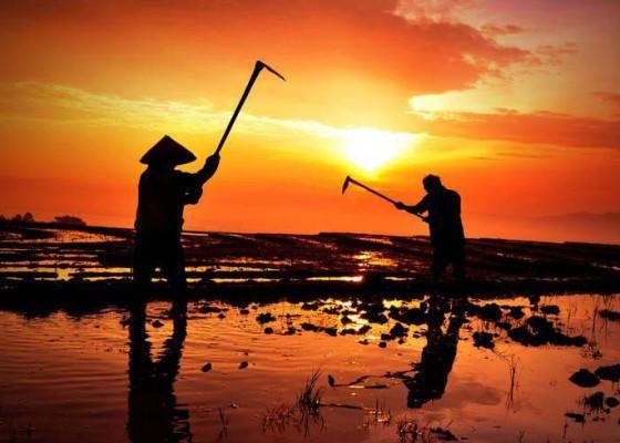 Nusabali.com - petani-jembrana-terima-bantuan-alat-mesin-pertanian-kementan