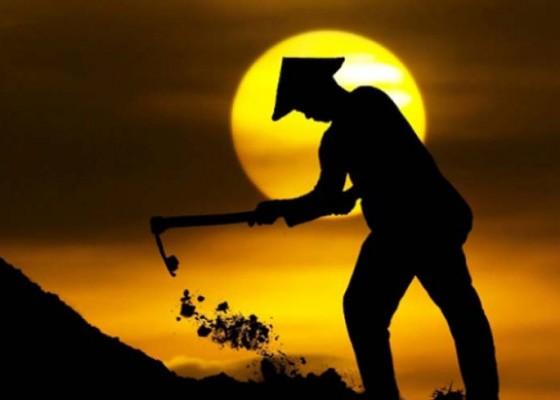 Nusabali.com - petani-bali-jalani-pelatihan-buah-unggulan