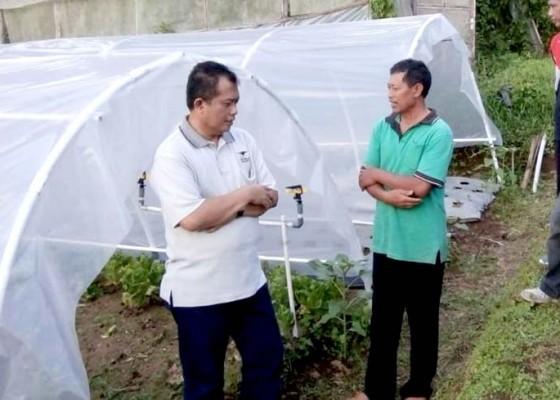 Nusabali.com - tim-dosen-unud-lakukan-pendampingan-pertanian-organik