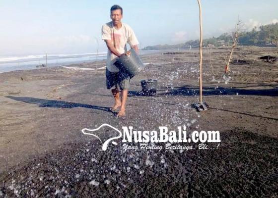Nusabali.com - petani-garam-krisis-regenerasi-berharap-bantuan-mesin-sedot-air
