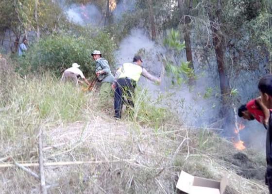 Nusabali.com - hutan-lindung-di-songan-b-terbakar