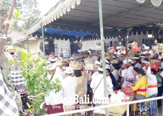 Nusabali.com - pujawali-pura-pedarman-pusat-pulasari-nyejer-7-hari