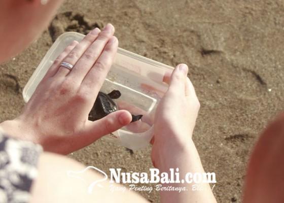 Nusabali.com - pelepasan-ratusan-tukik-tandai-pembukaan-petitenget-festival