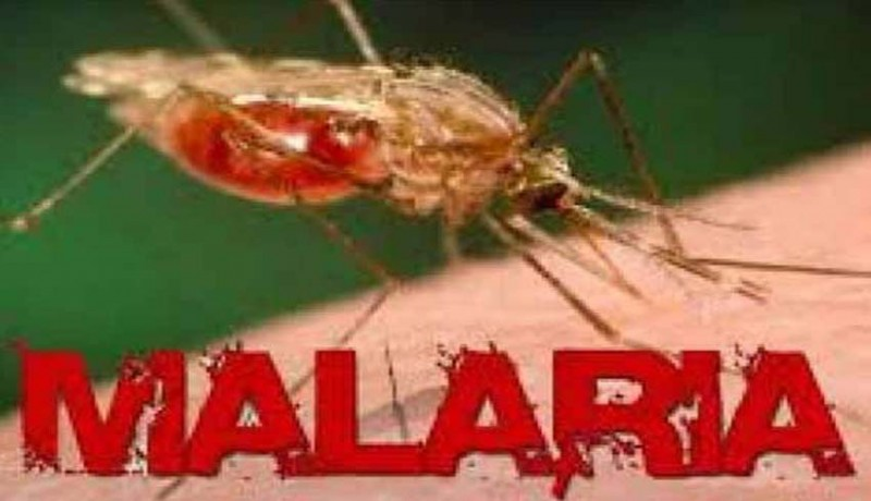 www.nusabali.com-ratusan-pengungsi-terinfeksi-malaria