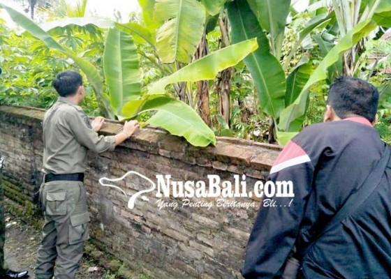 Nusabali.com - monyet-muncul-jelang-kajeng-kliwon-warga-batuagung-merasa-terganggu