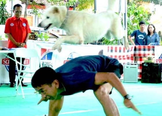 Nusabali.com - anjing-lokal-bali-unjuk-gigi-di-taman-kota