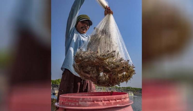 www.nusabali.com-ekspor-ikan-bali-jeblok