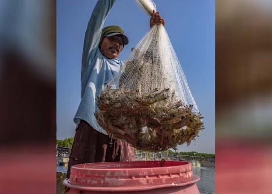Nusabali.com - ekspor-ikan-bali-jeblok