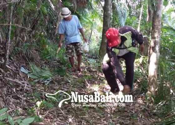 Nusabali.com - wisatawan-mulai-lirik-trekking-telunwayah-duuran