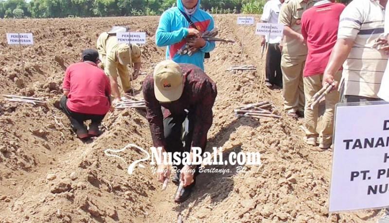 www.nusabali.com-lokasi-perluasan-lahan-tebu-belum-dipastikan