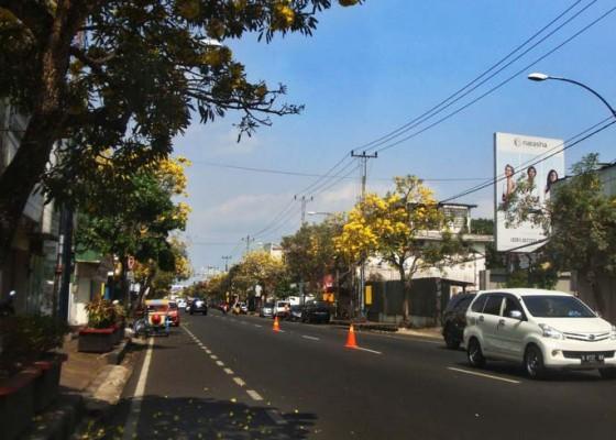Nusabali.com - tabebuya-bikin-semarak-di-sepanjang-jalan