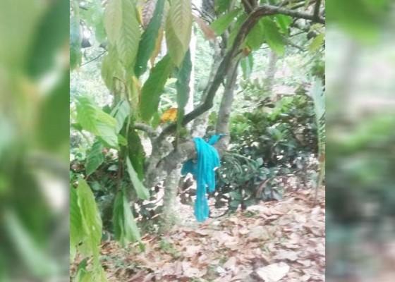 Nusabali.com - sakit-perut-irt-nekat-gantung-diri-di-pohon-cokelat