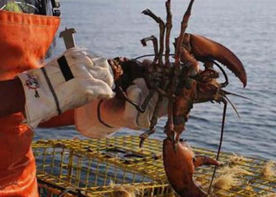 Nusabali.com - komplotan-penyelundup-lobster-disidang