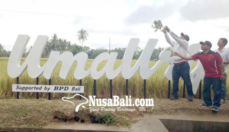 www.nusabali.com-umaurip-wujudkan-pertanian-ramah-lingkungan