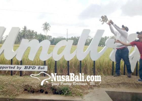 Nusabali.com - umaurip-wujudkan-pertanian-ramah-lingkungan