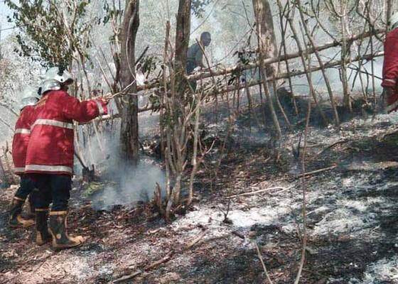 Nusabali.com - kemarau-semak-di-lahan-kering-mudah-terbakar