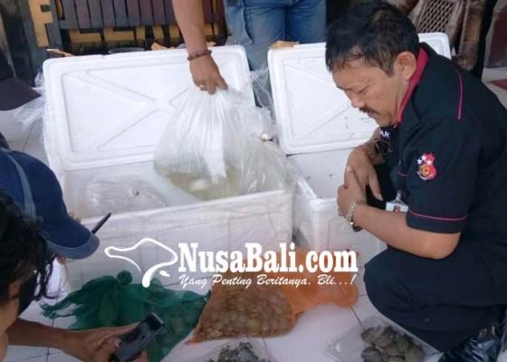 Nusabali.com - 689-tukik-diamankan-di-gilimanuk
