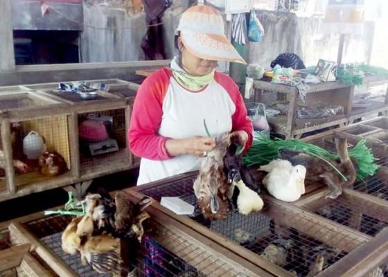 Nusabali.com - ayam-kampung-mengalami-lonjakan-harga