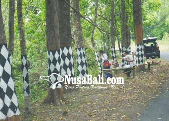 Nusabali.com - desa-sebudi-bangun-objek-wisata-jelajah-hutan